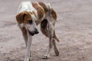 В Индии голодные псы начали есть детей