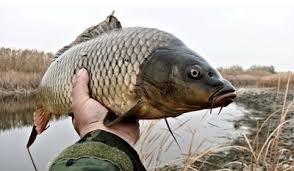 Где заказать регулярную поставку живой рыбы?